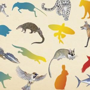 Kalandraka, Inventário ilustrado dos animais com cauda, Emmanuelle Tchoukriel