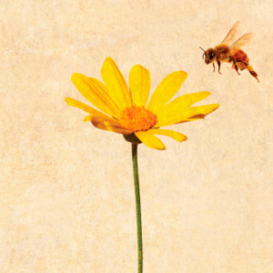 A morte de um apicultor, Marcador, Deus Me Livro, Lars Gustafsson