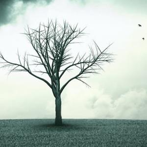 Eu sou a Árvore, Companhia das Letras, Deus Me Livro, Possidónio Cachapa