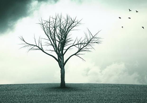 Eu sou a Árvore, Possidónio Cachapa, Deus Me Livro, Companhia das Letras