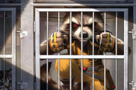 BD Marvel Goody, Curtas da Estante, Guardiões da Galáxia, Rocket Raccoon, Deus Me Livro
