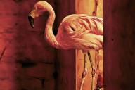 O Castigo dos Ignorantes, Suma de Letras, Deus Me Livro, Hjorth & Rosendfeldt