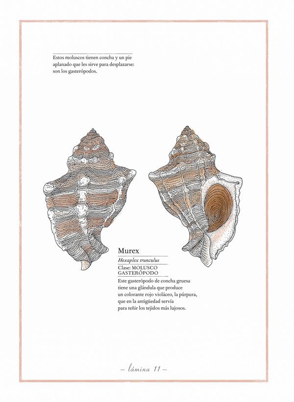 Inventário Ilustrado dos Mares, Kalandraka, Deus Me Livro, Virginie Aladjidi, Emmanuelle Tchoukriel